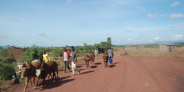 dona una mucca (3)