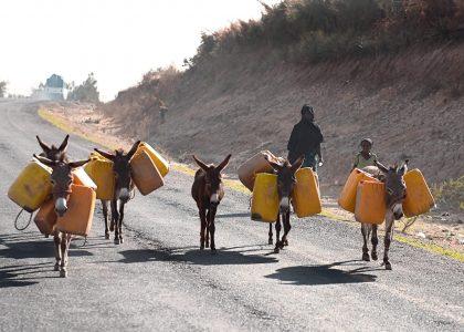 Perché gli animali sono indispensabili in Africa?